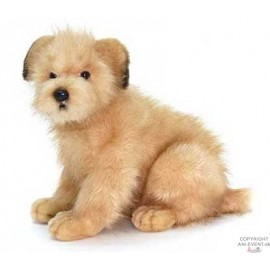 Norfolk terrier dog app 38 cm