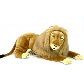 Male Lion lying App 110 cm long